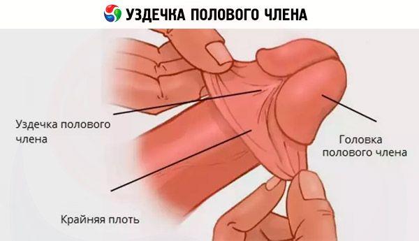 الجراحة التجميلية لعملية تجميل القضيب تتنافس حول الصحة على Ilive